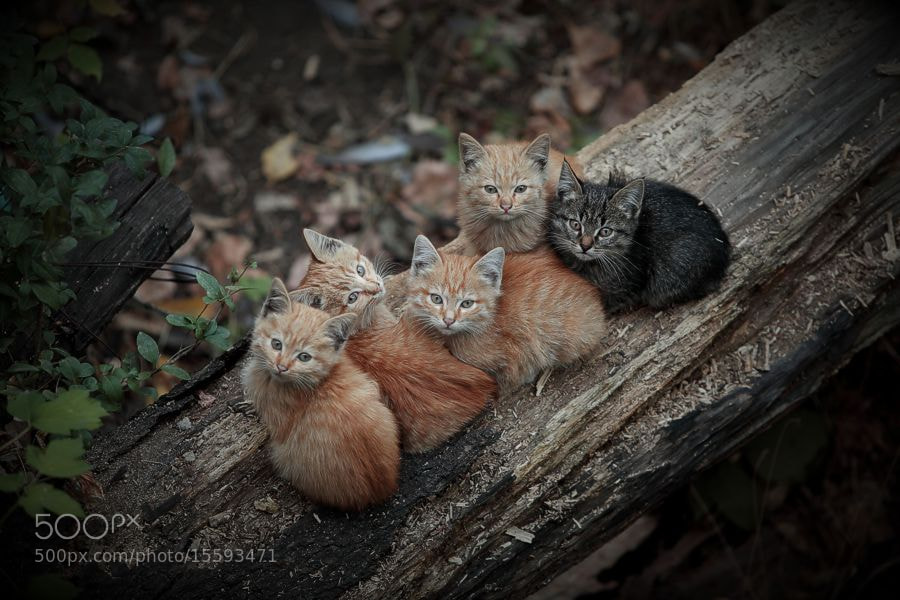 Photograph The Magnificent Five by Андрей Хуснутдинов on 500px