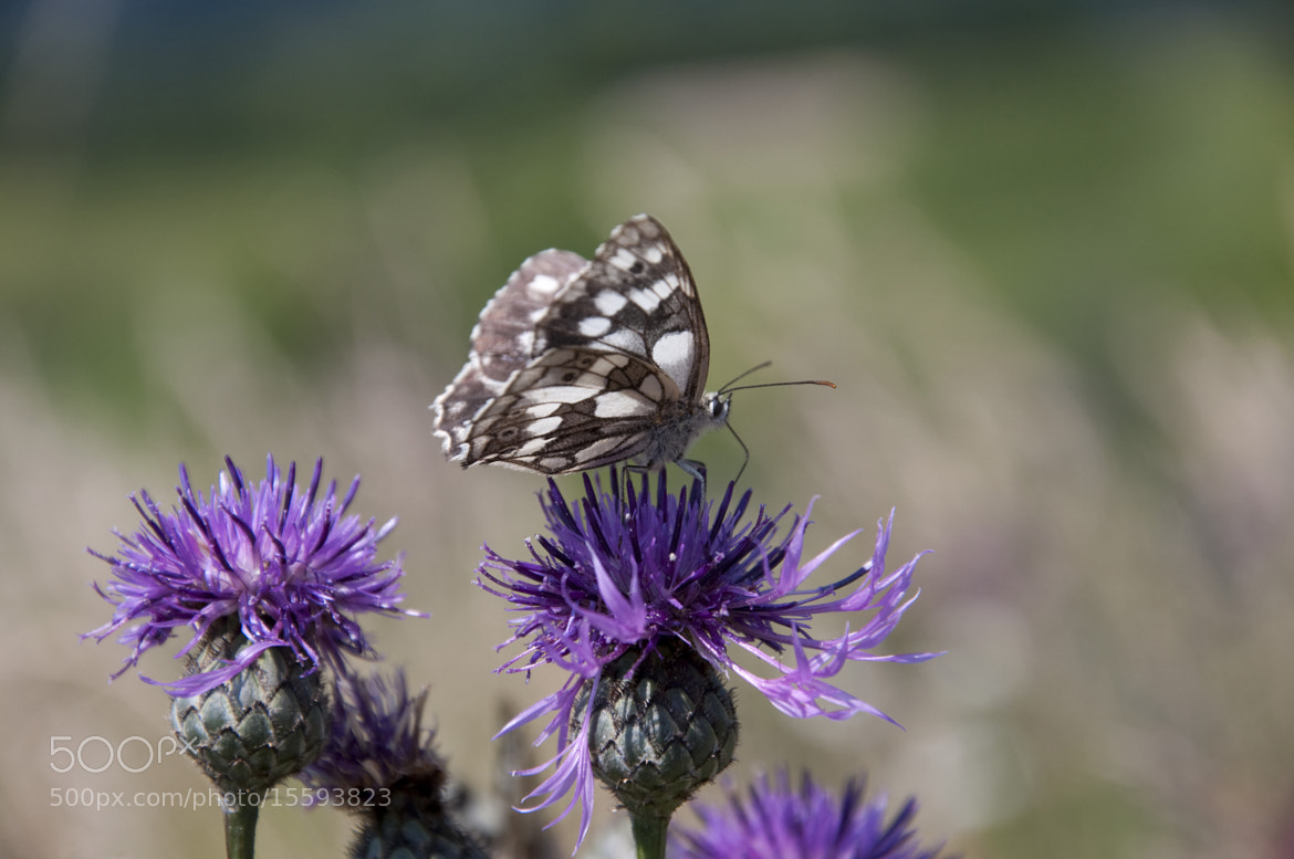 Photograph Butterfly and Flower by Domagoj Kovačić on 500px
