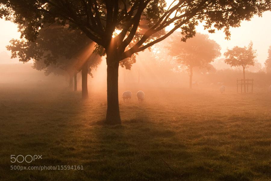 Grove Farm Northamptonshire,UK