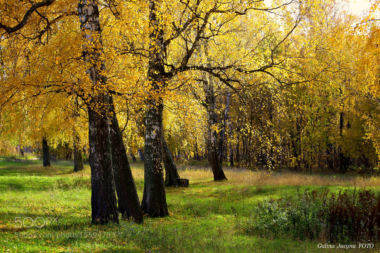 Photograph October 8 ... by Galina   Jacyna on 500px