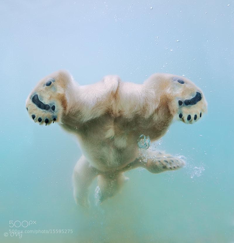 Photograph Water ballet by Olga Gladysheva on 500px