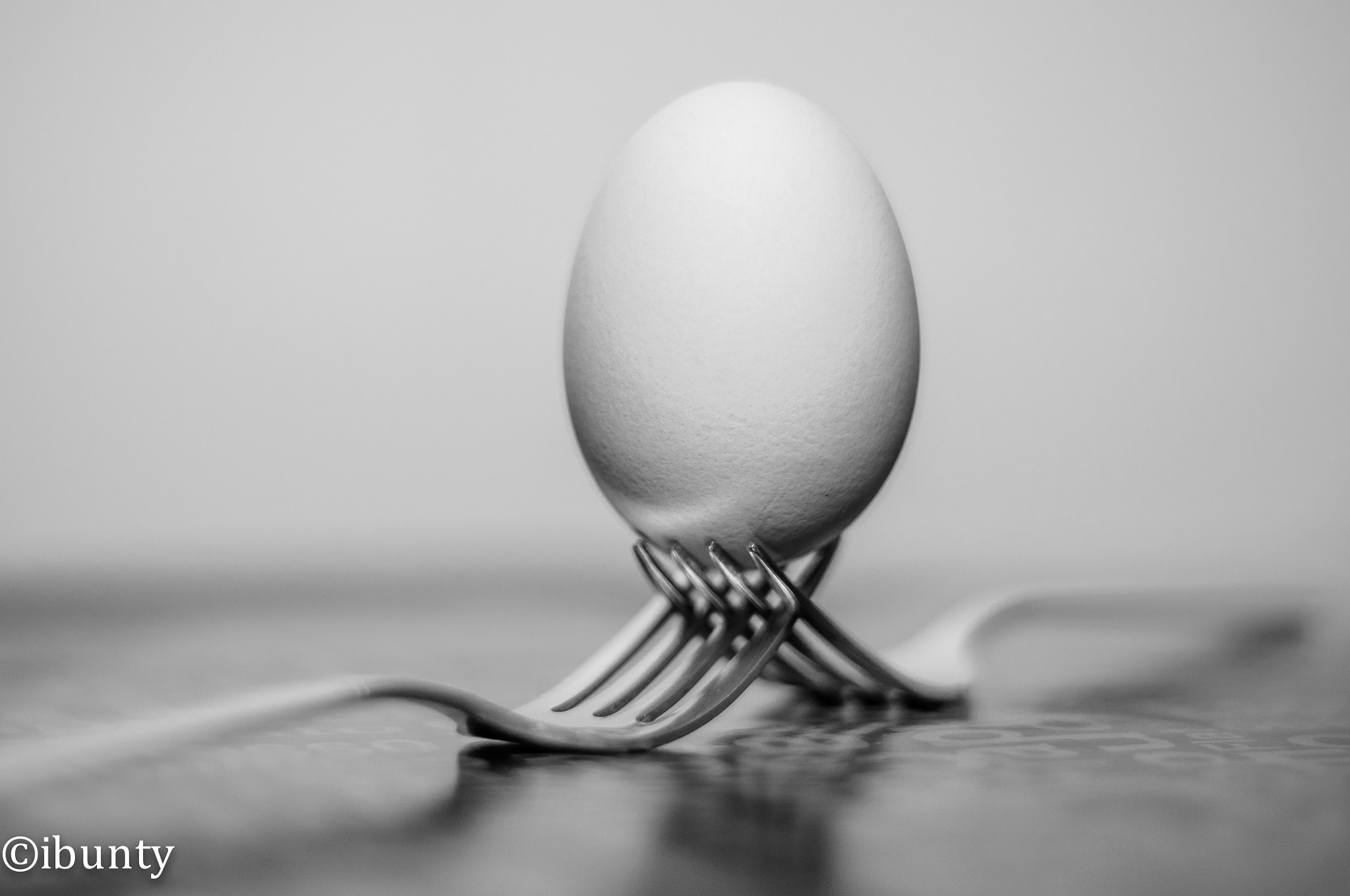 Photograph Egg by i500 ... on 500px