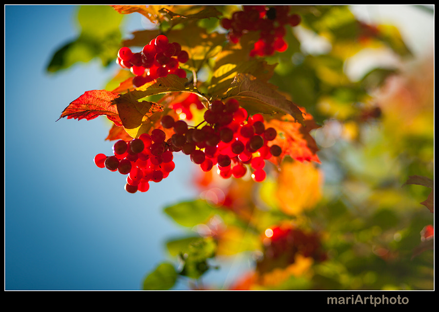 Photograph Rudens by Rolands Kozulis on 500px