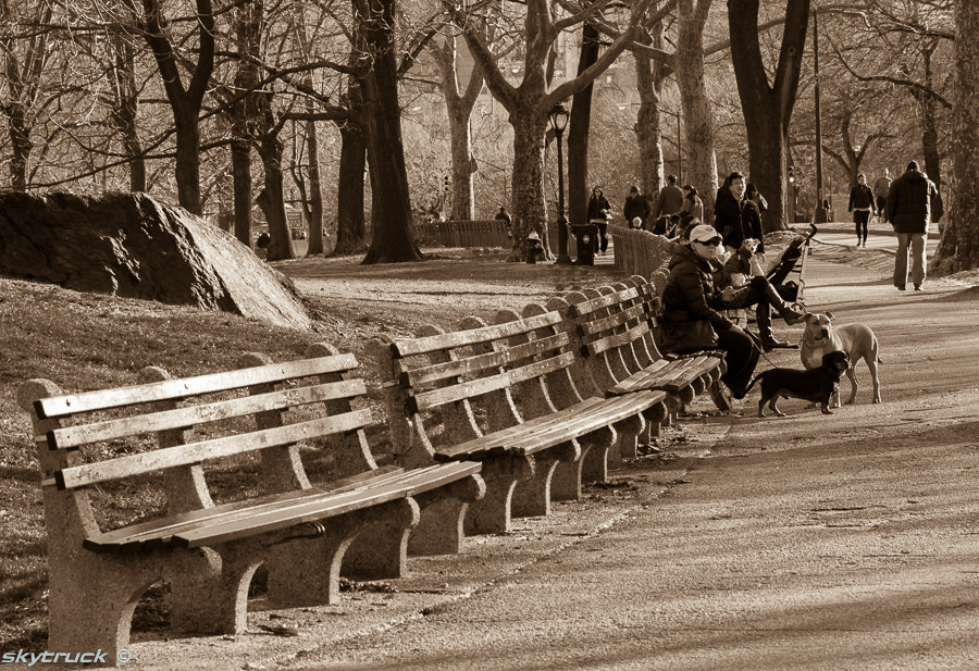 Photograph Benches by Mikhail Shklyarenko on 500px