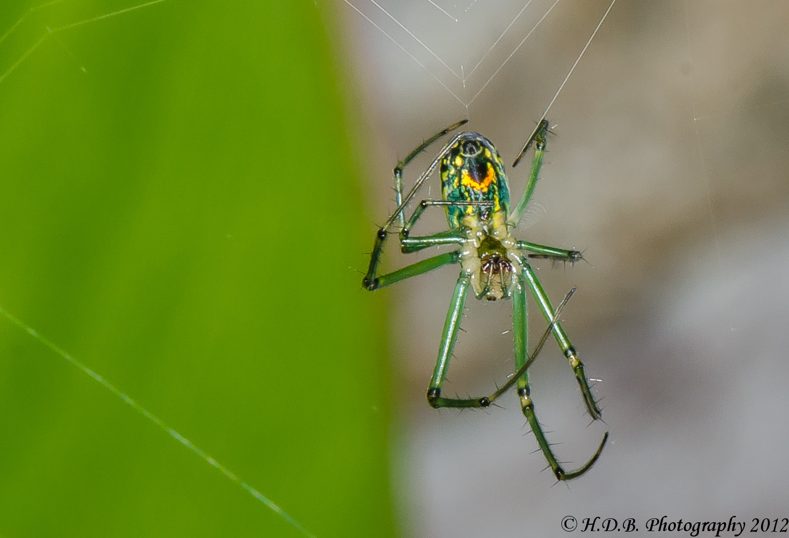 Photograph Itsy Bitsy Spider by Harold Begun on 500px