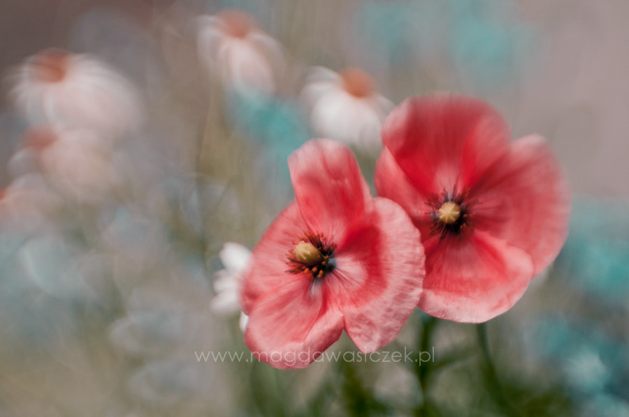 """Photograph No.146 """"Soft...."""" by Magda Wasiczek on 500px"""
