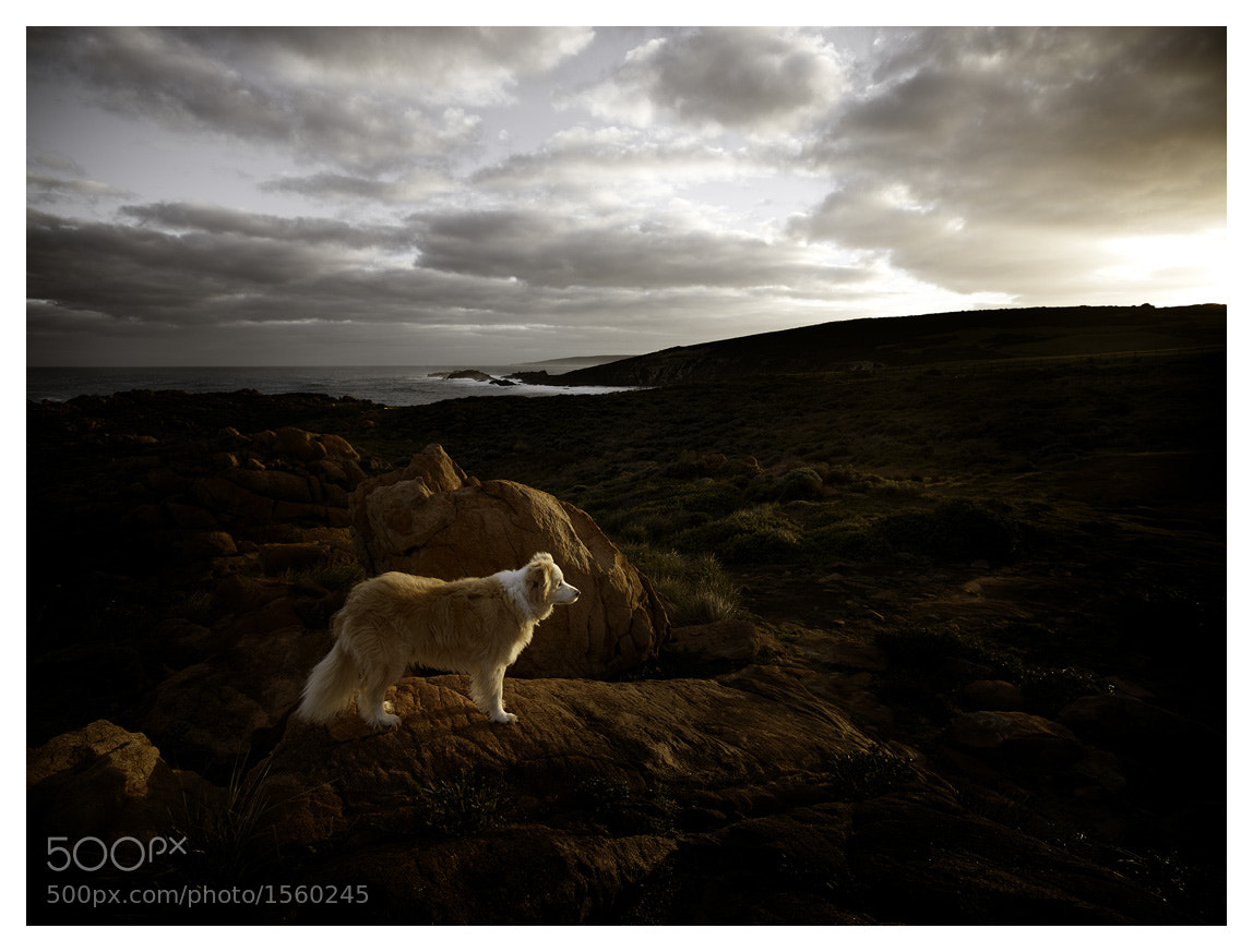 Photograph Fuji the Wonder Dog by Christian Fletcher on 500px