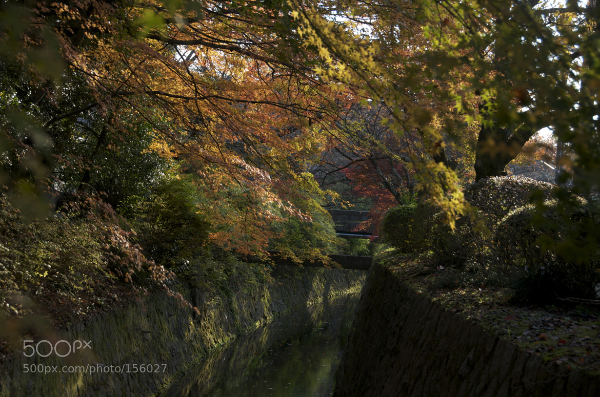 Photograph Kyoto autumn by Andrew Taburinsky on 500px