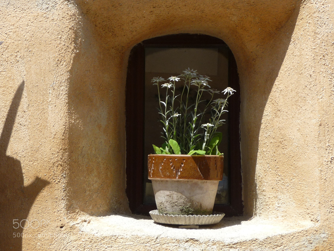 Photograph Edelweiss at window by Delia Cozma on 500px