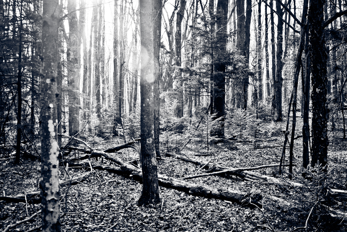 Photograph Woods by Gonzalo  Pardo on 500px