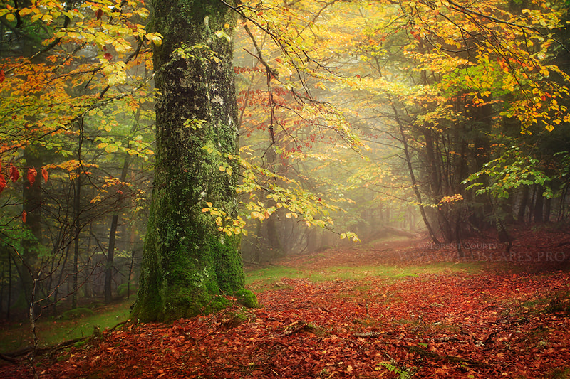 Photograph Along a Forgotten Way by Florent Courty on 500px