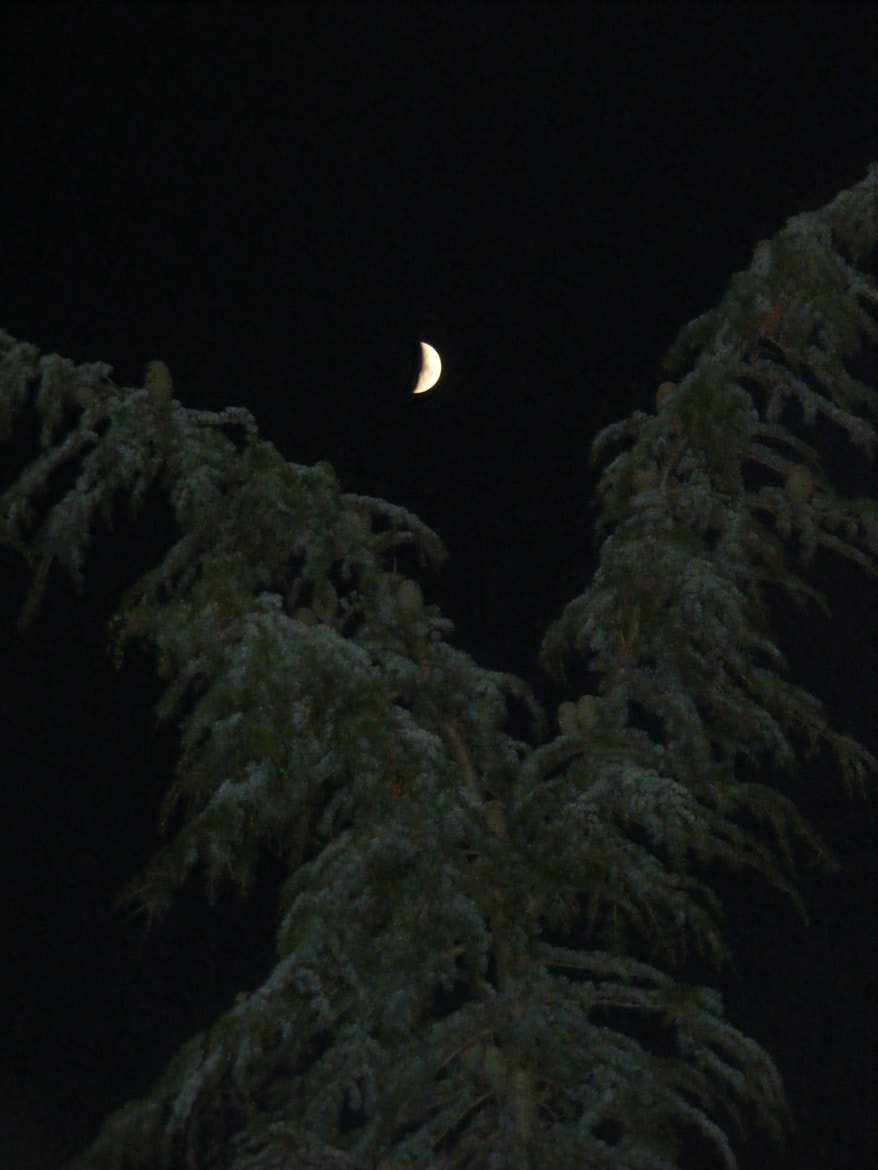 Photograph Moon between the trees by Jessica Roberts on 500px