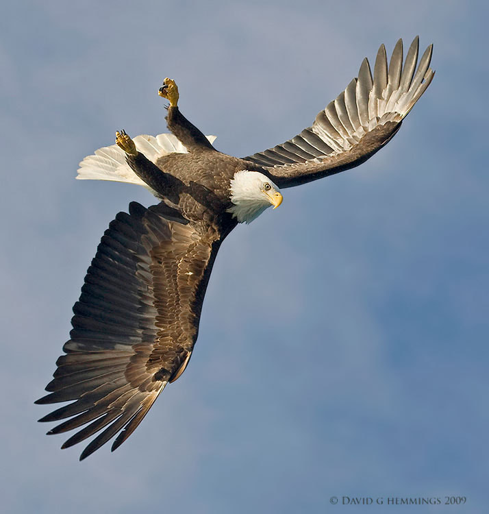 Photograph Eagle Flight Contortions by David Hemmings on 500px