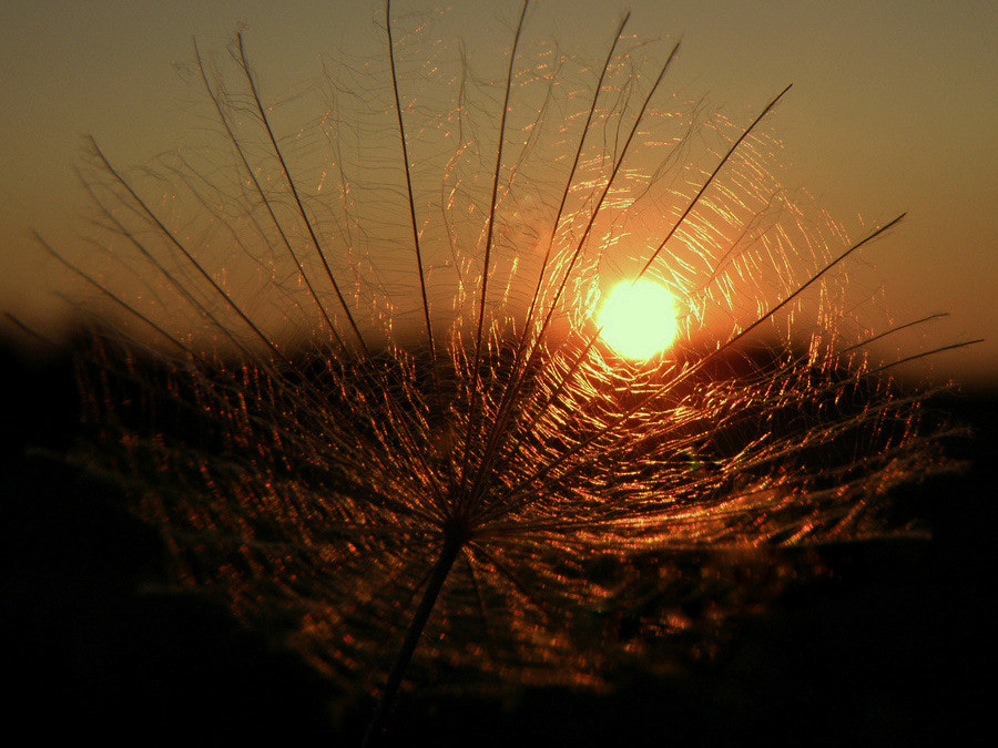 Photograph Sunset by **  REgiNA  **  on 500px