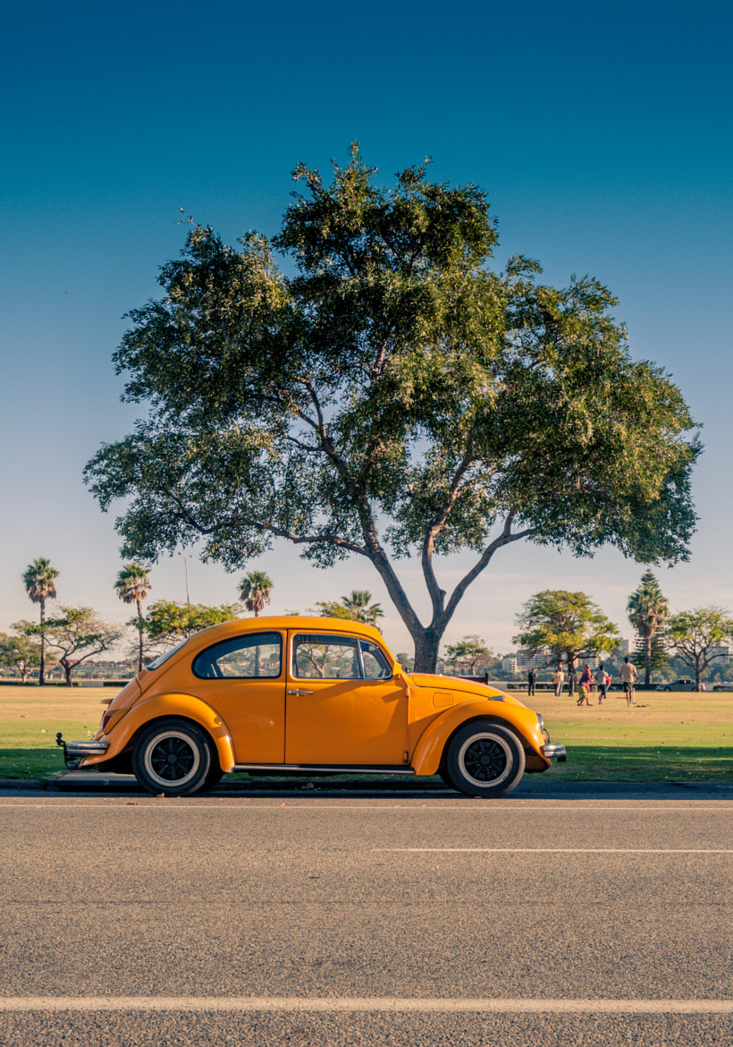 Photograph yellow.beetle by Arno Kohlem on 500px