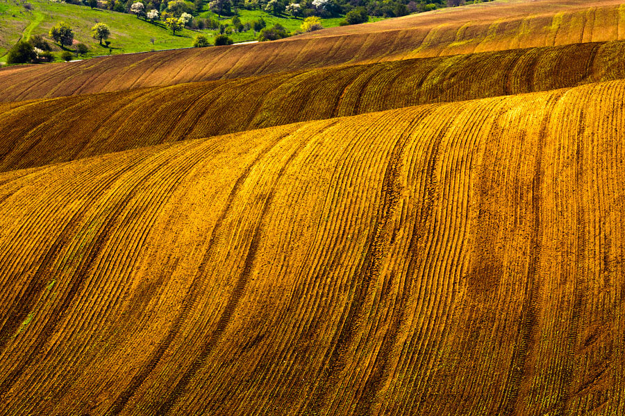 Photograph Brown Waves by Evgeni Dinev on 500px