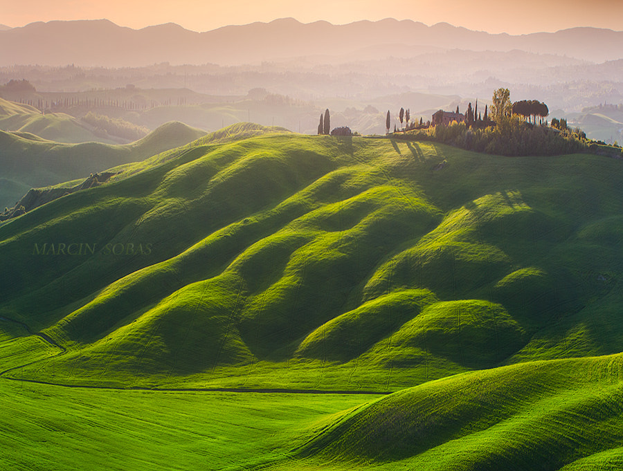 Golden tubers by Marcin Sobas on 500px.com