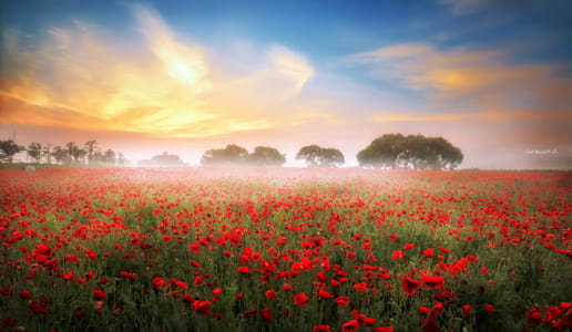 Poppy world by Klassy Goldberg on 500px