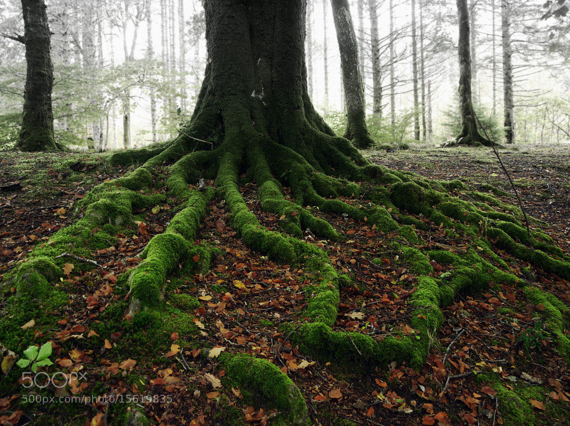Photograph CELTIC ROOTS by KENNY BARKER on 500px