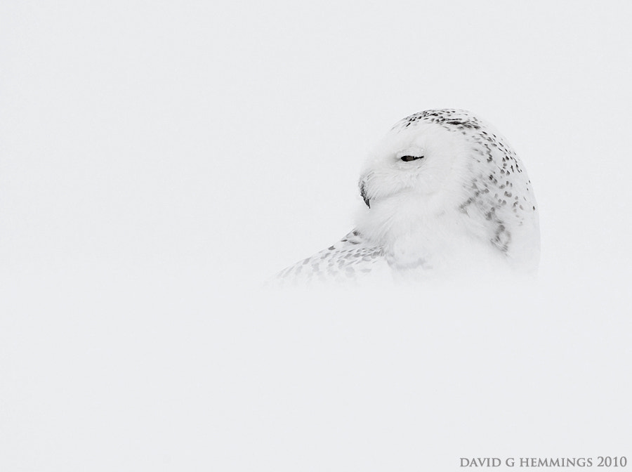 Photograph Snow Ghost by David Hemmings on 500px