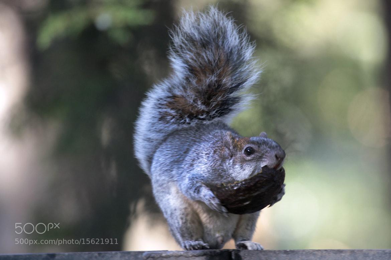 Photograph Squirrel eating breakfast by Cristobal Garciaferro Rubio on 500px