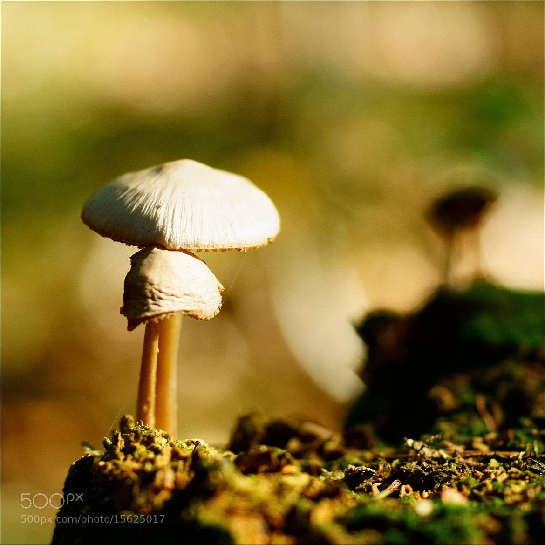 Photograph like a fairy tale by Atsje Bosma on 500px