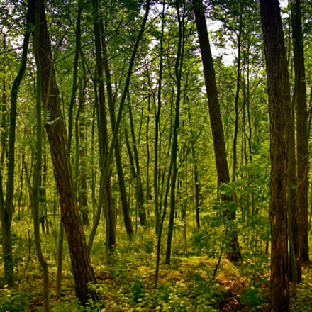The Forest, Fujifilm X30, Built-in lens