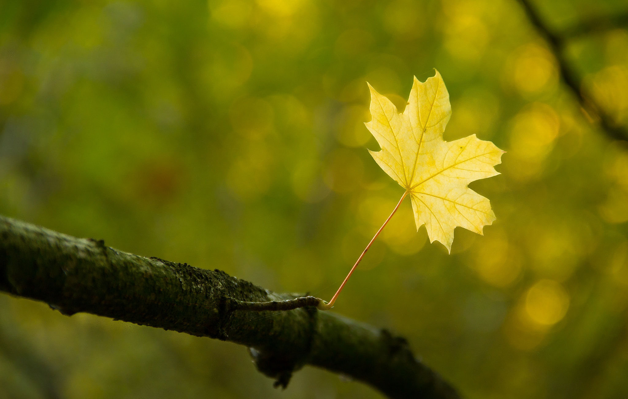 Photograph Time for some autumn colours! by Lasse Hjort on 500px