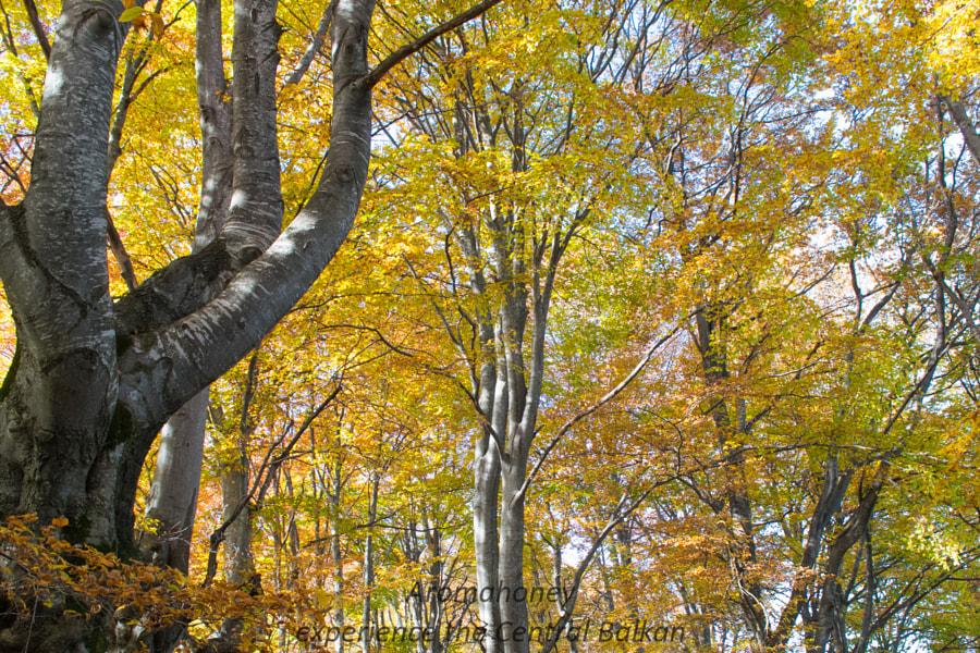 Aromahoney in Autumn