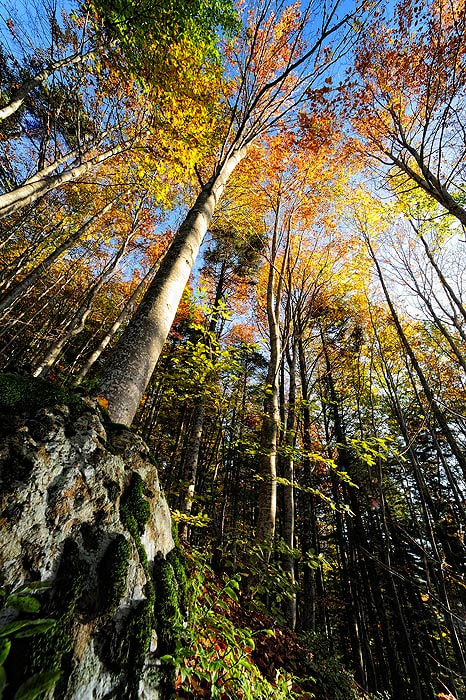 Photograph Aveto forest by Mirko Sotgiu on 500px