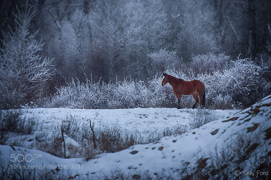 """PS: If you like my images, check out my  <a href=""""http://fordfotos.com"""">Ford Photography Website</a>"""