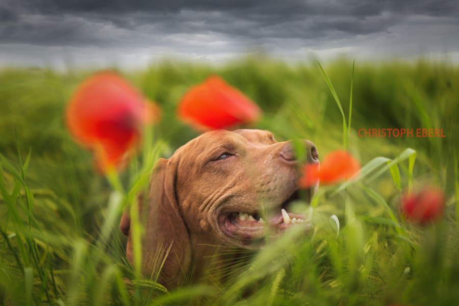 Wonderful by Christoph Eberl on 500px.com