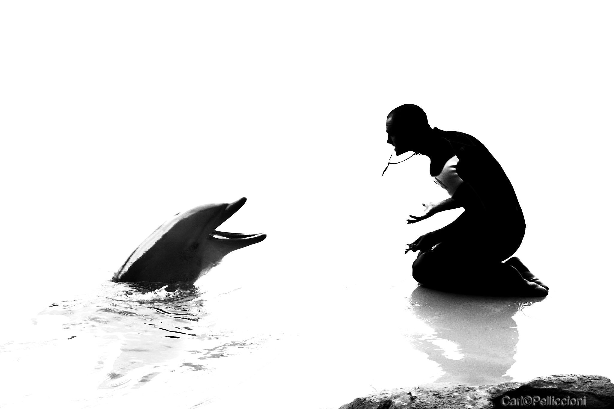 Photograph Dolphin trainer   by Carlo Pelliccioni on 500px