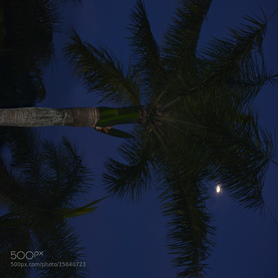 Photograph Bali Moon by Elizabeth Atkinson on 500px