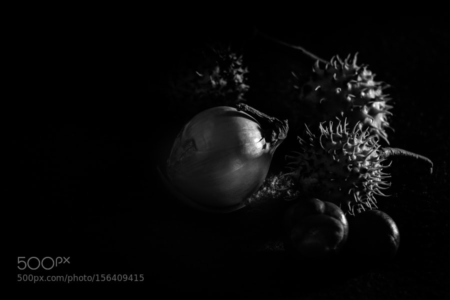 In black and white. Onion and chestnut.