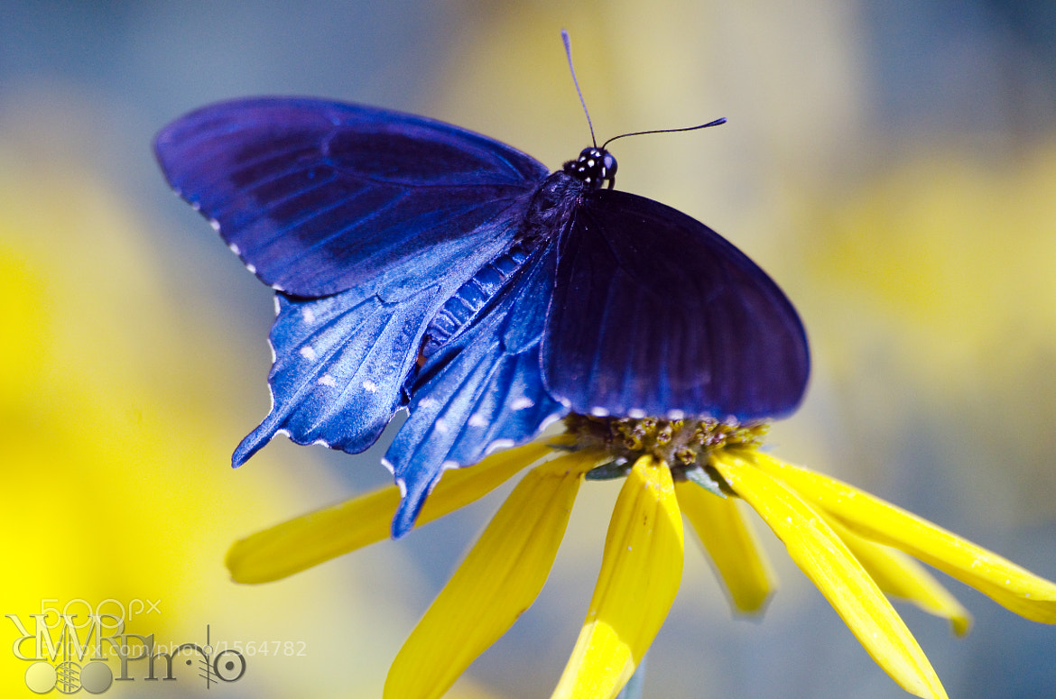 Photograph Butterfly F by Wayne Reich on 500px