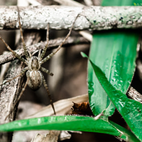 spider by Marco Freitas (MarcoFreitas1)) on 500px.com
