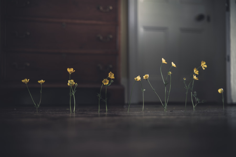Flowers and Floorboards No.1 by Frederick Ardley on 500px.com