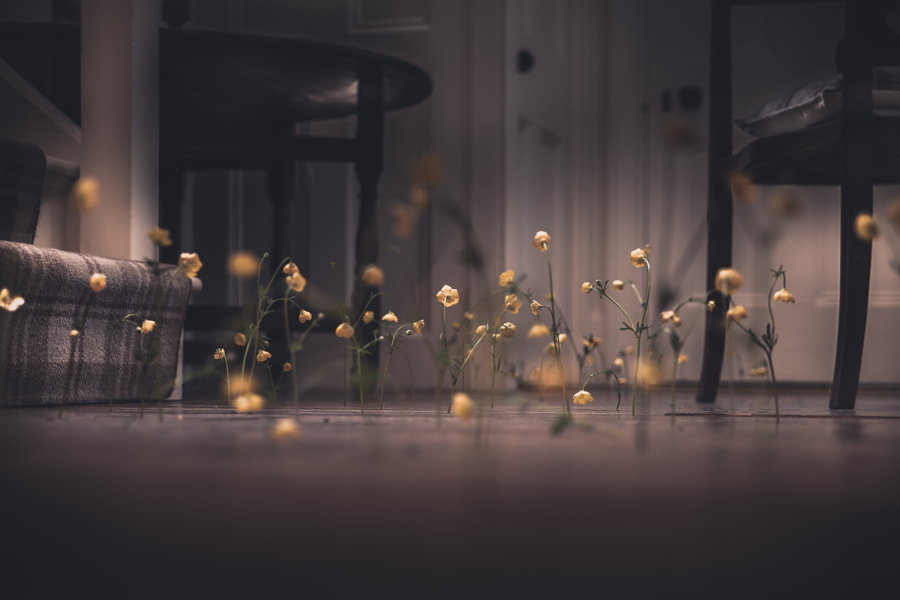 Flowers and Floorboards No.2 by Frederick Ardley on 500px.com