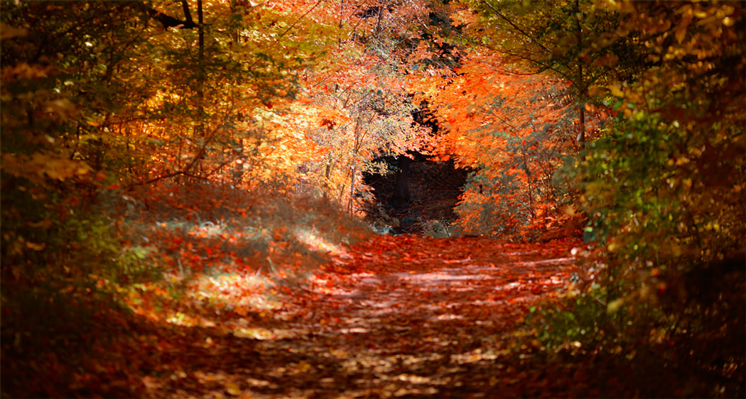 Photograph forest alley by Alexsander BB on 500px