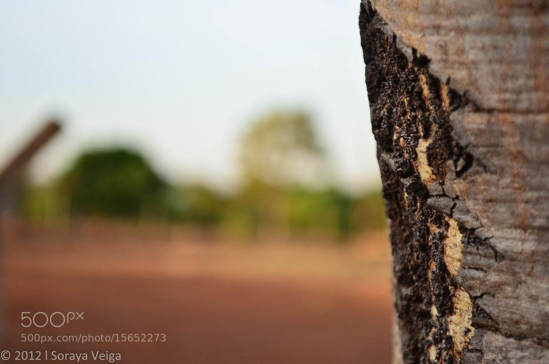Photograph Calejada by Soraya Veiga on 500px