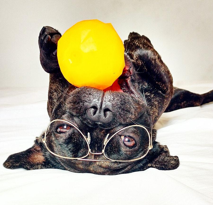 Dog and Orange by Gael The Bulldog on 500px.com