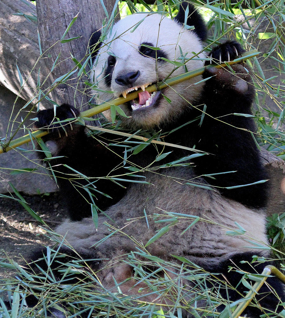 Photograph Bamboo is my greatest joy! by Rainer Leiss on 500px