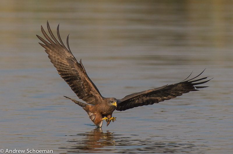 Photograph Fishing Kite by Andrew Schoeman on 500px