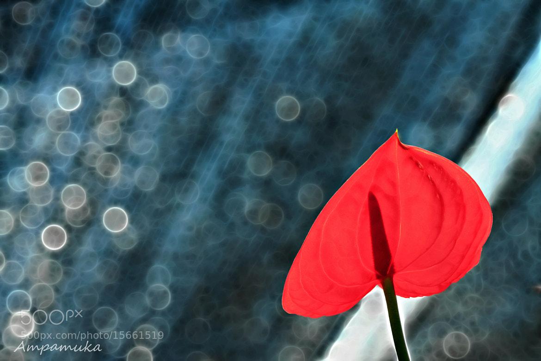 Photograph Flamingo in Love by Suradej Chuephanich on 500px