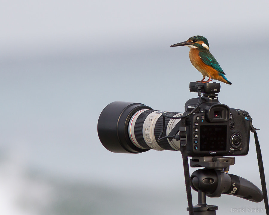 Photograph Kingfisher on Camera by Jacki Soikis on 500px