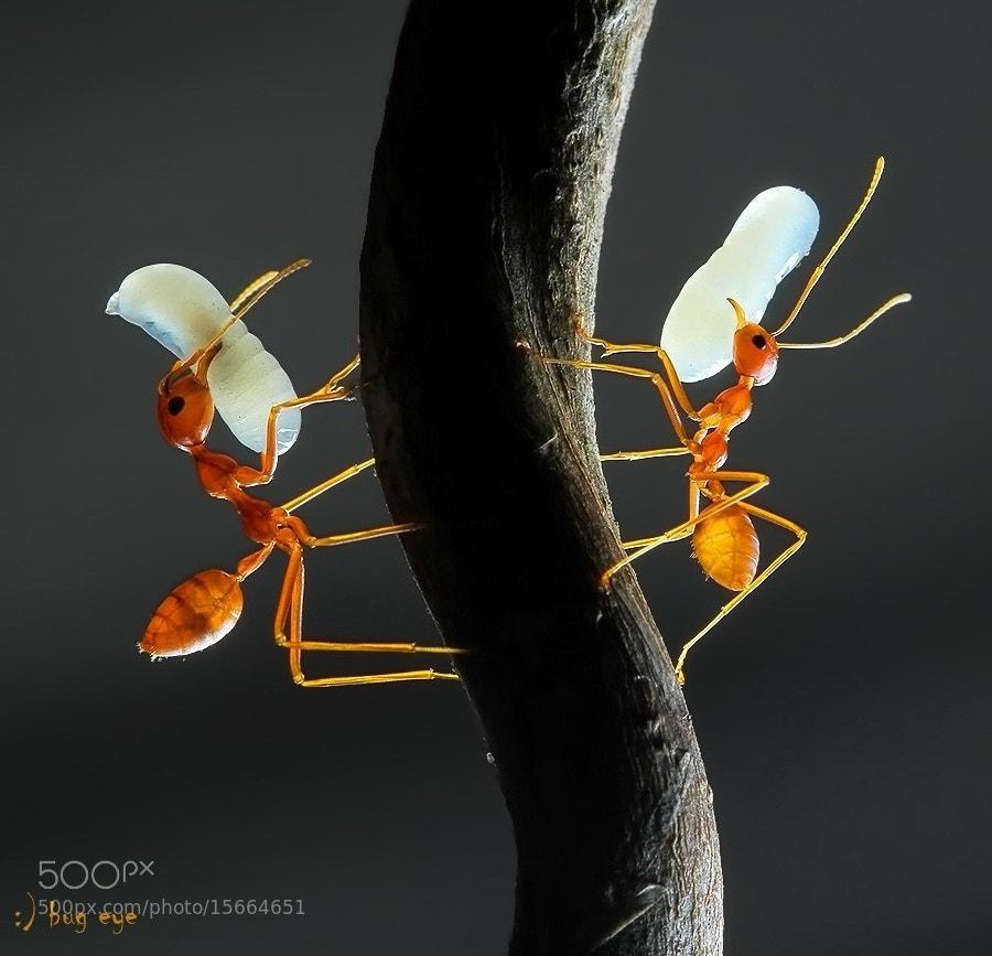 Photograph my LoOOoOooOove #2 by bug eye :) on 500px