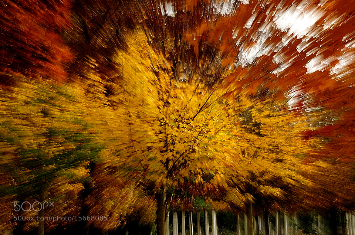 Photograph zoom sur automne by kak tuss on 500px
