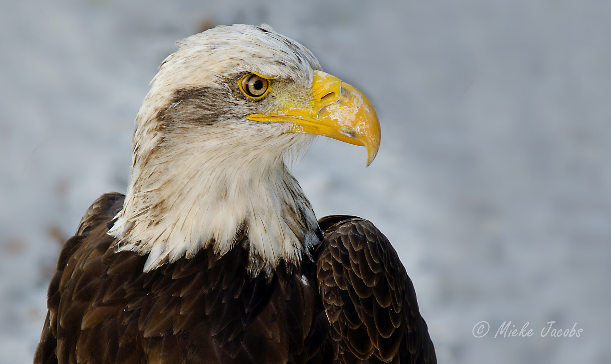 Photograph The Eye of the Eagle by Mieke Jacobs on 500px