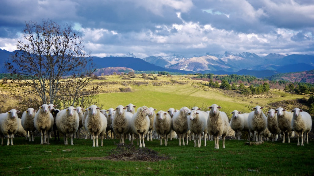 Photograph Herd two by Abraham Castillo Nieto on 500px